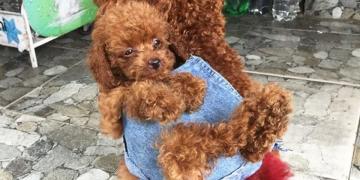 Yeni Doğan Yavrusunu Sırtında Taşıyan Anne Köpek ve Sevimli Hikayesi