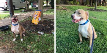Üzücü Bir Not İle Trafik Levhasına Bağlanarak Terk Edilen Köpeğin Hikayesi