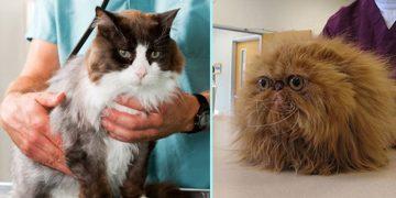 Veteriner Ziyaretlerinde Kedinizin Stresini Azaltmanız İçin Yapabileceğiniz 5 Şey