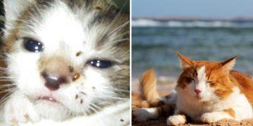 Yaz Aylarında Kedileri Bekleyen Tehlikeler