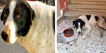 Bir Akademisyen Tarafından Kaçırılan Mahallenin Köpeği Çıtır'dan Üzücü Haber Geldi