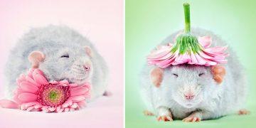 Hamster Bakımı ve Özelliği Hakkında Mutlaka Öğrenmeniz Gereken 16 Şey