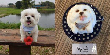 Evcil Hayvanların Fotoğraflarını Kahve Sanatına Dönüştüren Kafenin Birbirinden Güzel Çalışmaları