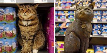 Yıllarca Çalıştığı Markete, Anısını Yaşatmak İçin Heykeli Dikilen Kedi Brutus