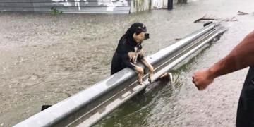 Texas'tan Utanç Verici Fotoğraflar: Kasırga Sırasında Ağaca Bağlanarak Ölüme Terk Edilen Köpekler