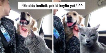 Aynı Evi Paylaşmaktan Hiç De Mutlu Olmayan Birbirinden Komik 55 Kedi ve Köpek