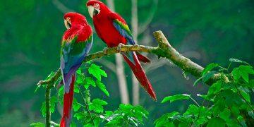 En İyi Konuşan 10 Papağan Türü ve Özellikleri