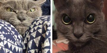 Sinirli Bakışları Yüzünden Hiç Evi Olmamış Kedi Shamo Hala Ömürlük Yuvasını Bekliyor