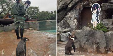 Hayvanat Bahçeleri İşkencedir: Kafesinden Karton Figür Alınınca Depresyona Giren Penguenin Acıklı Öyküsü
