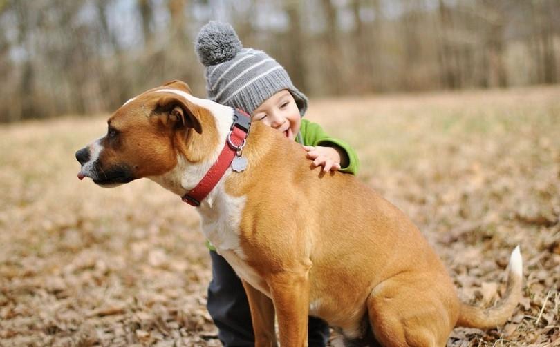 Hayvan sevgisi sözleri...