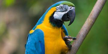 Papağan Cinsleri: En Çok Beslenen 15 Tür ve Özellikleri