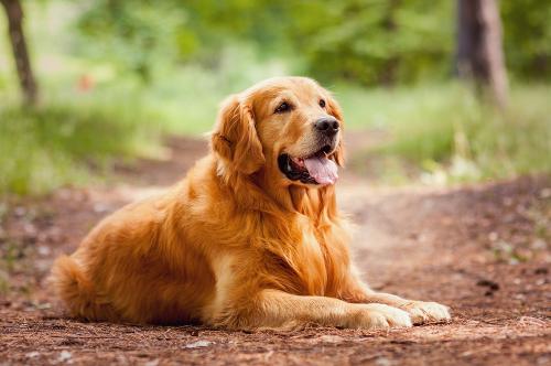 Dişi Köpek İsimleri ve Anlamları