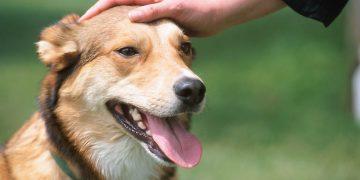 Erkek Köpek İsimleri ve Anlamları