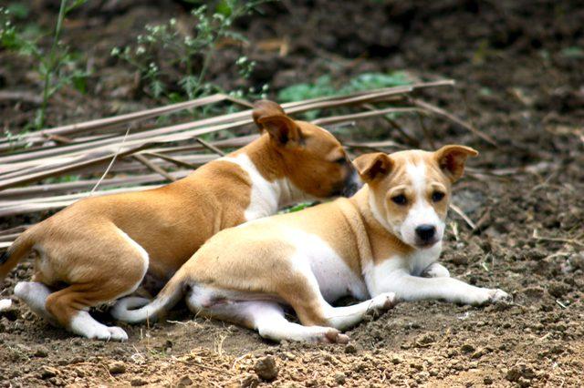 erkek köpek isimleri ve anlamları