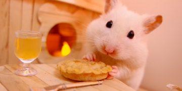 Hamsterlara Asla Vermemeniz Gereken 16 Yiyecek