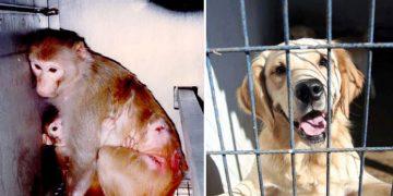 Türkiye'de Hayvan Haklarıyla İlgili Bilmeniz Gereken 8 Soru ve Cevap