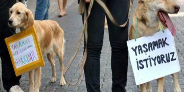 Yasalara Göre Hayvan Hakları ve Bilinmesi Gerekenler