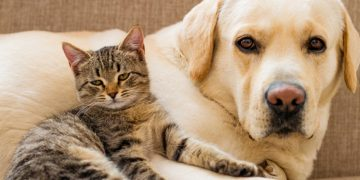 Güzel Haber İngiltere'den: Kedi ve Köpek Yavruları Pet Shoplarda Satışı Yasaklandı