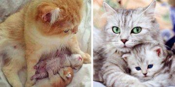 Şirinlikleriyle Kalpleri Eritecek 11 Farklı Anne Kedi ve Yavruları