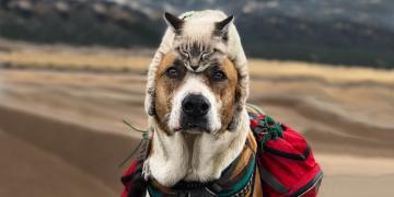 Şirinlikleriyle Kalpleri Eritecek Gezgin Köpek ve Kedinin Bizleri Kıskandıracak 19 Fotoğrafı