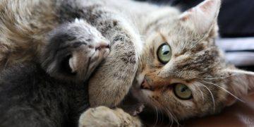 Kedinizin Hasta Olup Olmadığını Anlamanız İçin Dikkat Etmeniz Gereken Belirtiler