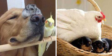 Hayvanlar Aleminden, Birbirinden Güzel 11 Şaşırtıcı Dostluk Fotoğrafı