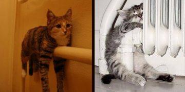 Kışın Gelişiyle Kalorifere Yapışan 11 Sıcaksever Kedi