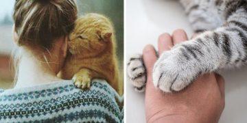 Kedileri Anlamanın 15 Yolu
