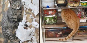 Kedilerin Yalnızken Yaptığı 9 Gizli Şey