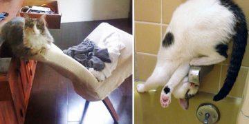Kedilerin İnsanlardan Daha Üstün Bir Irk Olduğunun 9 Kanıtı