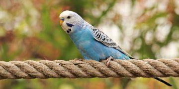 Cevaplıyoruz: Muhabbet Kuşunun Hapşırması