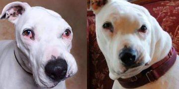 Yıllarca İşkence Gören Köpek 12 Yaşındaki Çocuğun Yanına Gidip Bakın Ne Yaptı