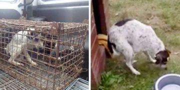 Yıllarca Kafese Hapsedilen Zavallı Köpek Toprağa Patileriyle Basınca Bakın Nasıl Seviniyor
