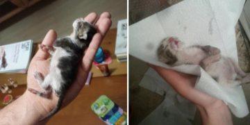 Veteriner Hekimin Ölecek Dediği Yavru Kediyi Hayata Döndüren Güzel Kalpli Kadın