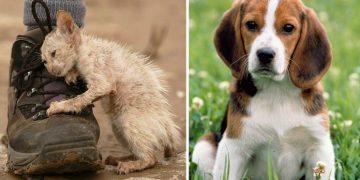 Hayvanseverlerin Aklına Düşen 9 Korku Dolu Soru