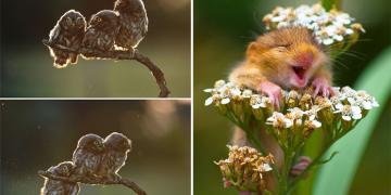 Gününüzü Şenlendirecek, Başarılı 14 Komik Vahşi Yaşam Fotoğrafı