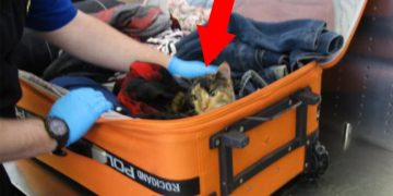 Yok Artık! Kedilerini Bavula Koyup Uçağa Binmeye Çalıştılar