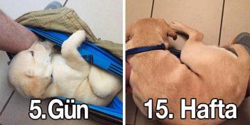 Hafta Hafta Köpeğinin Büyümesini Takip Eden Adamdan Birbirinden İlginç Fotoğraflar