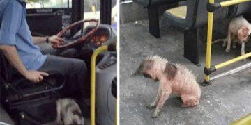Fırtınanın Ortasında Kalan Köpekleri Otobüse Alan Koca Yürekli Otobüs Şoförü