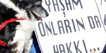 Müjdeler Olsun: Sokak Hayvanlarına İşkence Edenlere 4.5 Yıl Hapis Cezası Geliyor