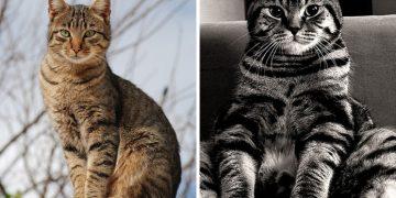 Tekir Kedi Sahiplenmek İçin 11 Şahane Sebep