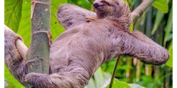 Tembel Hayvanlar Hakkında Bilmeniz Gereken 11 Şey
