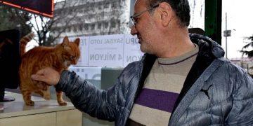 Esnaftan Örnek Davranış: Sigara Parasını Artık Sokak Kedileri İçin Harcıyor