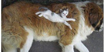 Yatarken Samimiyetin Zirvesine Çıkan 17 Minnoş Kedi