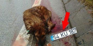 Yazıklar Olsun! Köpeğe Çarpan Vicdansız Adam Plakasını Düşürüp Kaçtı