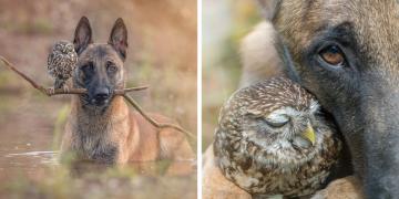 Köpek Ingo ve Baykuş Poldi'nin İçinizi Isıtacak Dostluğu