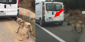 Birileri Artık 'Dur' Desin: Köpeği İple Kamyonetin Arkasına Bağlayıp, Sürükledi