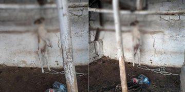 İzmir'de Vahşet: Zavallı Köpeği Asarak Öldürdüler
