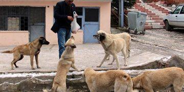 Maaşını Sokak Hayvanlarına Harcayan Koca Yürekli Muhtar