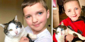 Kendisi Gibi Farklı Göz Rengine Sahip Olan Kediyi Sahiplenen Güzel Kalpli Çocuk